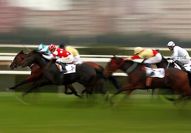 Equipement d'équitation - course de chevaux