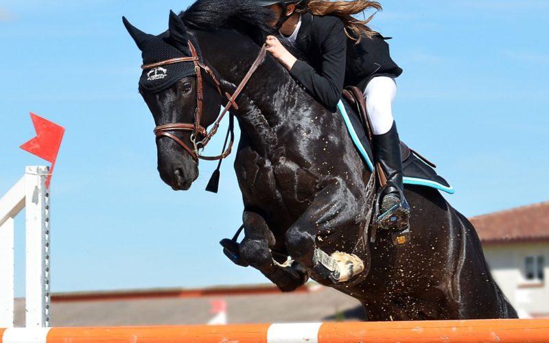 horseback-riding-1959584_1280
